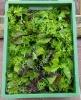 Asia-Salat (2)