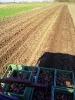 Kartoffeln legen (4)